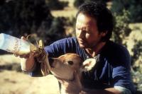 CITY SLICKERS, Billy Crystal, 1991, feeding calf