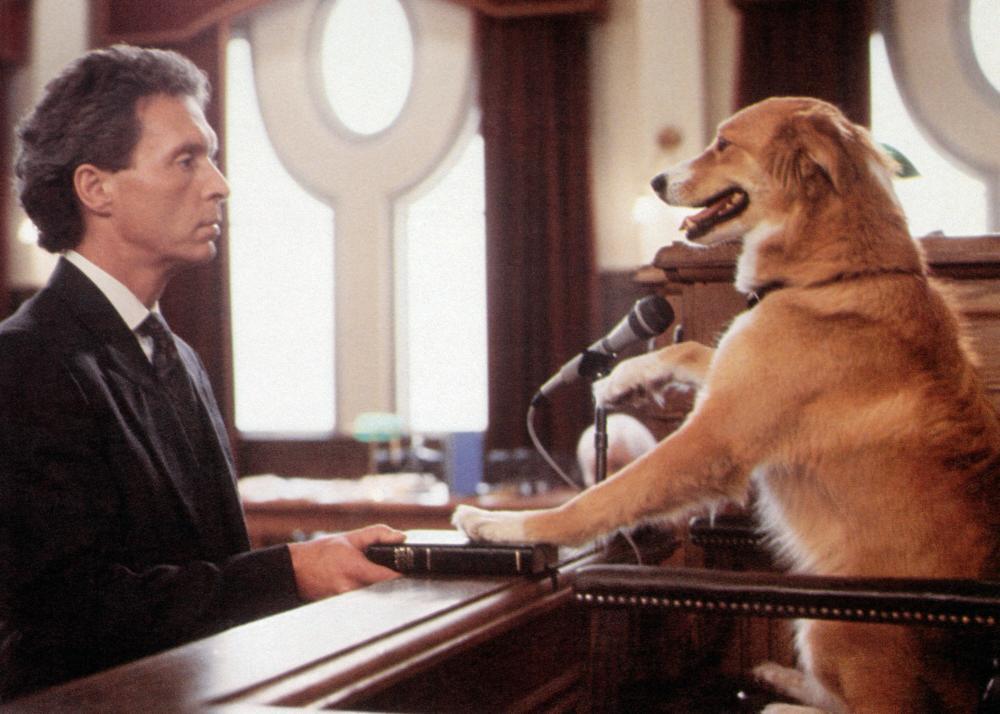 ผลการค้นหารูปภาพสำหรับ bingo the dog movie